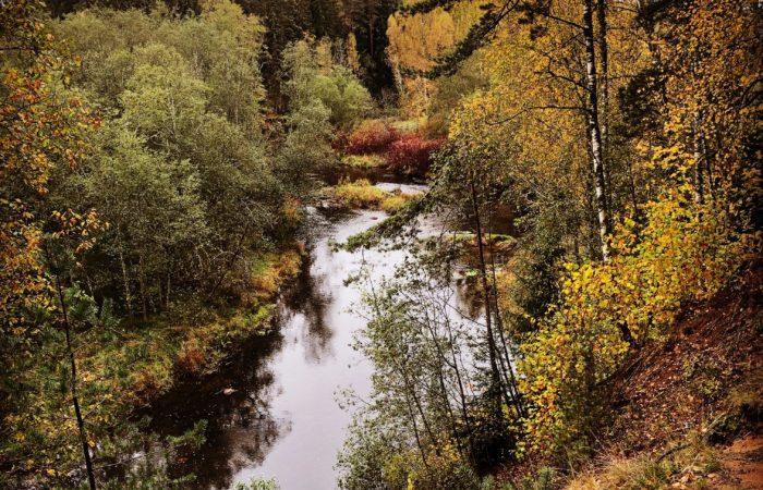 Gaujas upe